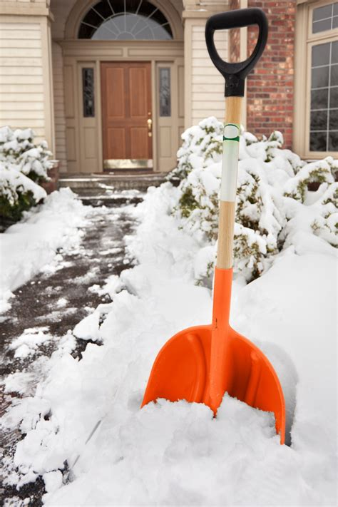 how to your not to inside what pests should you expect to see inside your home this winter and how to recognize