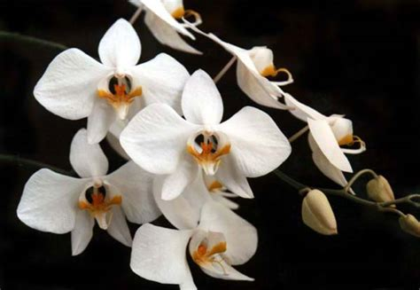 Pot Buat Anggrek cara mudah menanam bunga anggrek menggunakan pot corelita