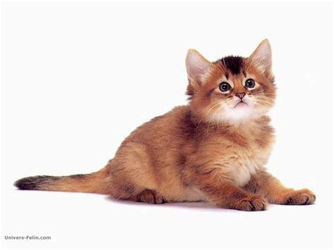 wallpaper chat mignon fond d 233 cran de chat chaton brun