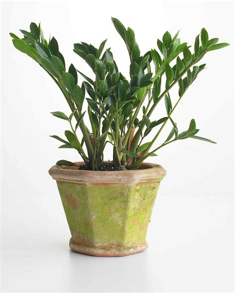 plants that do not need sunlight 100 plants that do not require sunlight biological