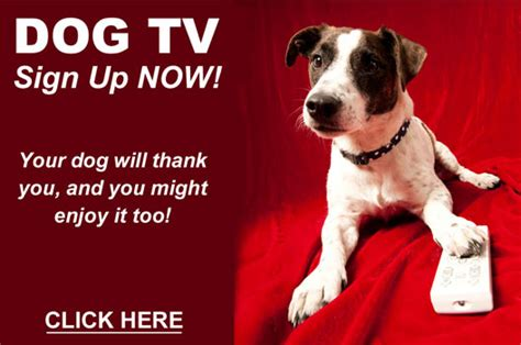 can dogs periods dogtv