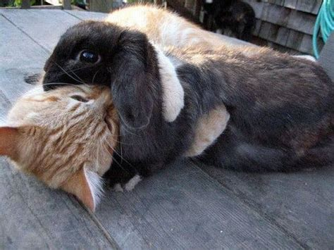 Cat Hugs Bunny ? 1Funny.com