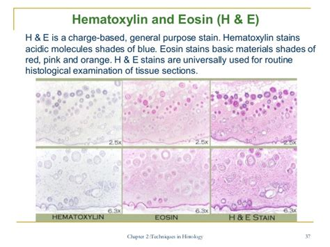 h e staining protocol for frozen sections chapter 2 bio 300 obe