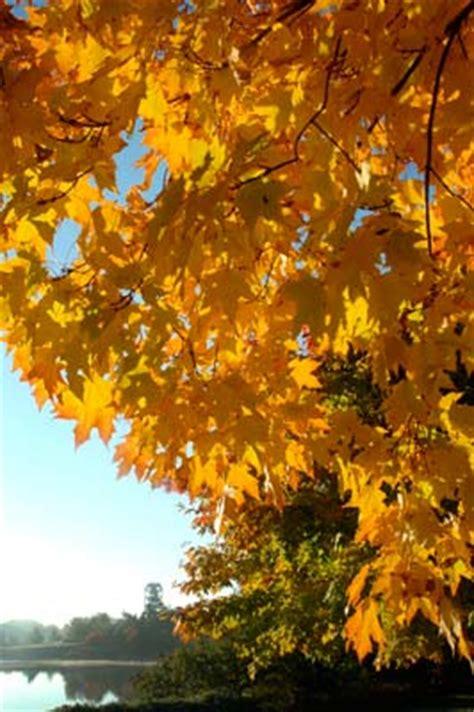 october fall color tree walk chicago botanic garden