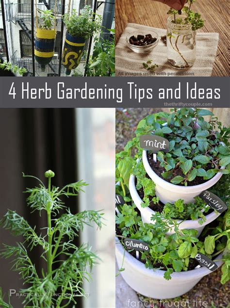 herb garden basics 4 herb gardening tips and ideas