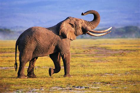 elephant wallpaper for pc elephant wallpapers wallpaper cave