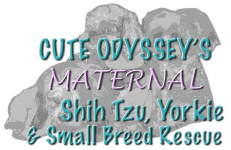 shih tzu rescue san diego odyssey inc pet shelter in san diego ca