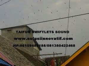 Suara Panggil Burung Walet Luar Lagu Walet Unik paket suara walet