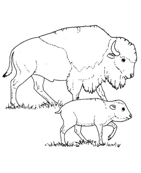 coloring pages animals wild wild animal coloring page bison mother and calf coloring