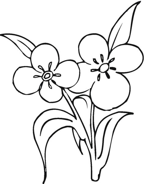 flower coloring pages part 2 2 flowers coloring page 187 coloring pages