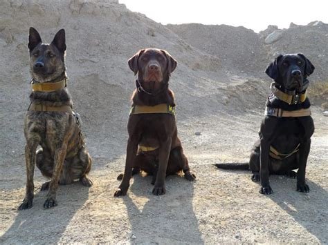 lynn lew k9 vids 861 best images about heroes military dogs on pinterest