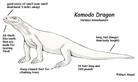 coloring pages of komodo dragon free komodo dragon coloring pages