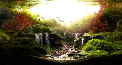Aquascapes Com Aga Aquascape Winners 2013