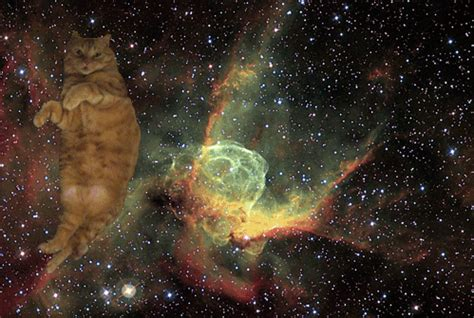 omg cats in space!!!   fat cat submitted by create neverland