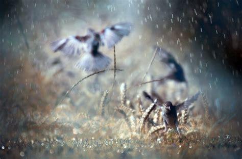 images of love birds in rain comment r 233 aliser de belles photos sous la pluie