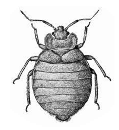 how much is a bed bug exterminator how much does pest control for bed bugs cost in india