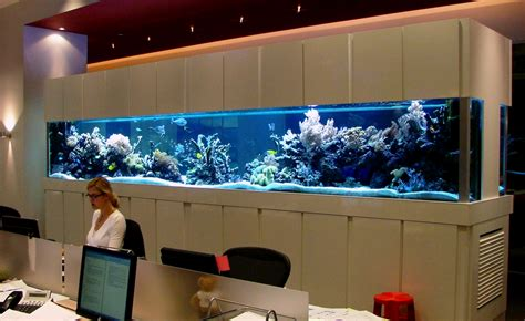 aquarium design uk fish tank maintenance service youtube 2017 fish tank