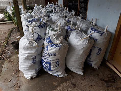 Bibit Rumput Odot Jawa Tengah pengiriman bibit odot cepu jawa tengah 53 000 stek
