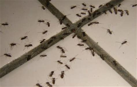 ants in house natural remedies to get rid of ants in your home emergency outdoors blog