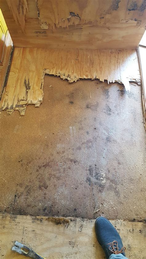 Repairing water damaged hardwood floors   Mr. Floor Chicago