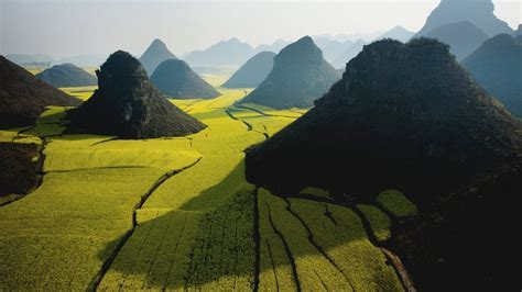 Canola Field In Luoping Wallpaper