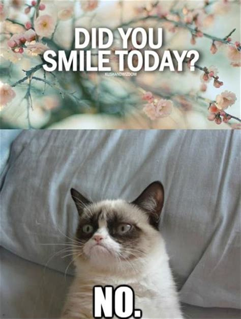 Smiling Cat Meme - ruffles and frills monday meme memeception