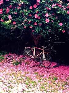 Pink Flower Garden Pink Flower Garden Pictures Photos And Images For And