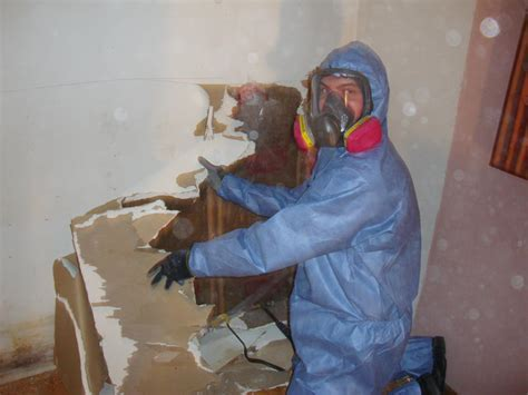 How to Remove and clean Black Mould   How To Build A House