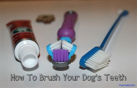 how to brush dogs teeth how to successfully brush your s teeth chasing my halo