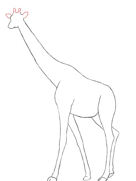 how to draw a giraffe draw central