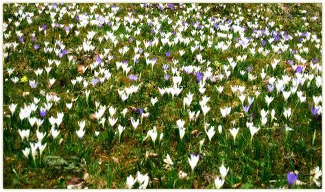 prati in fiore beatris click prati in fiore
