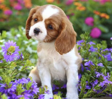 most popular breed in usa most popular breeds in the united states
