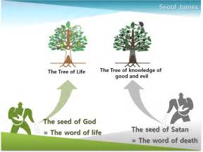 Meaning Of Trees the tree of life meaning in the bible www galleryhip com