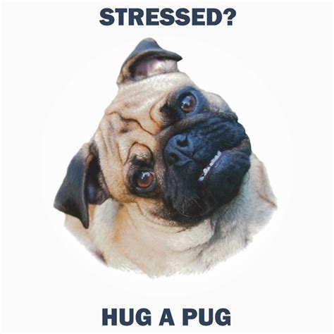 stressed pug quot pug stress relief quot t shirts hoodies by redbubble