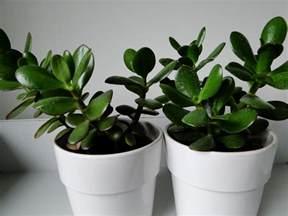 Indoor Houseplants Gallery For Gt Green Indoor Plants Names