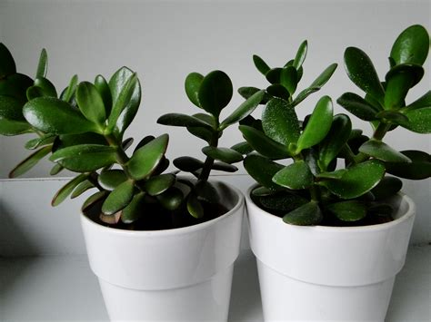 plants for the house house plants wellywoman