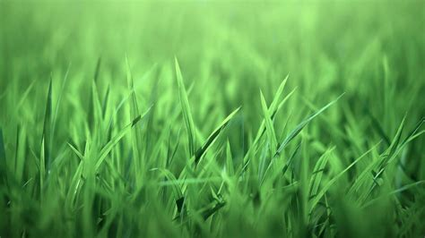 wallpaper hd green grass green grass wallpaper 274270