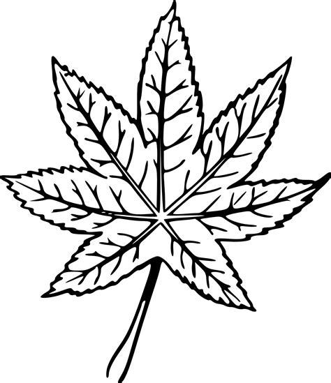 mint leaf coloring page drawn leaf clipart best