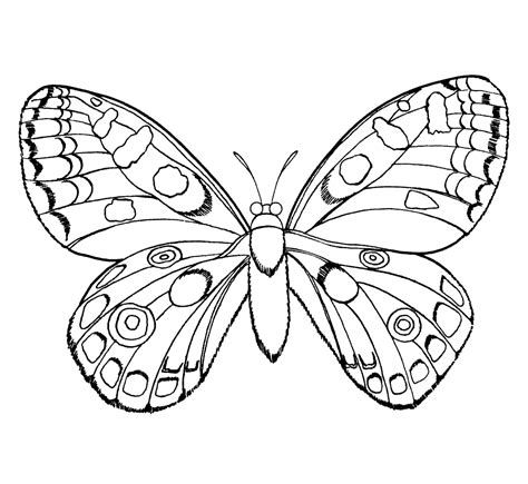 butterfly coloring pages dltk butterflies coloring pages 6897