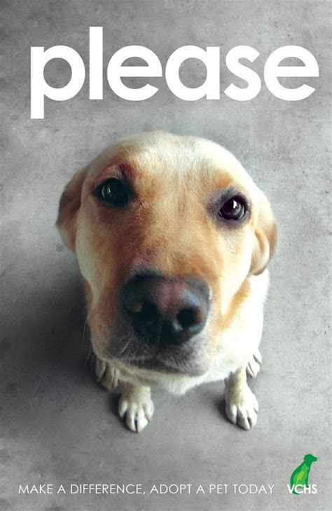 local pound image gallery local animal shelters