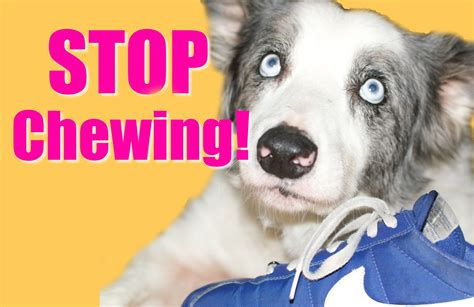 my dog won t come in the house stop that naughty doggie habit how to stop your dog s chewing friendly