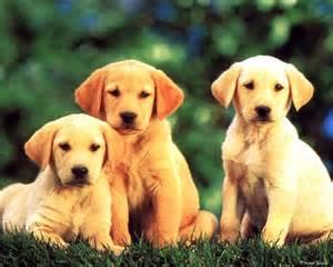 Dogs Dogs Feelmegood