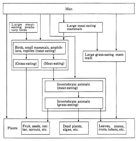 chimpanzee food chain diagram diagram of an orangutan diagram of a koala elsavadorla