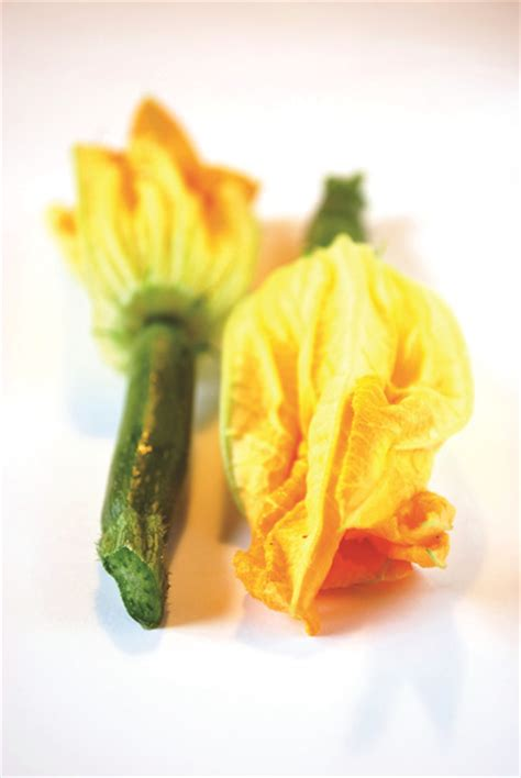 cuisiner la fleur de courgette 28 images recette de
