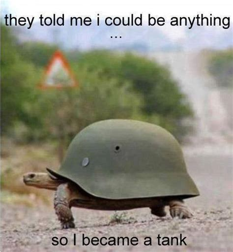 Funny Turtle Memes - turtle tank funny pictures quotes memes jokes