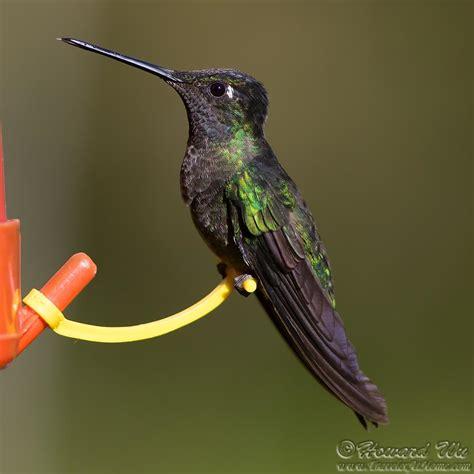 2016 costa rica 2 hummingbirds traveler home