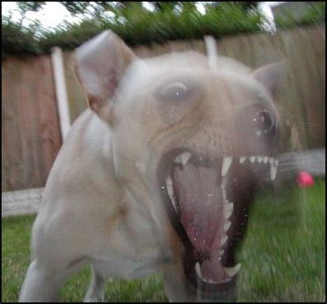 how to stop neighbors from barking how to stop a from barking at neighbors in the yard