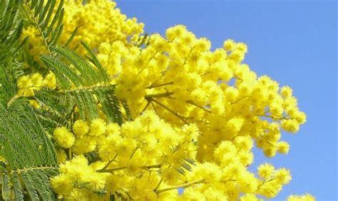 nome fiore 10 nomi femminili ispirati ai fiori greenme