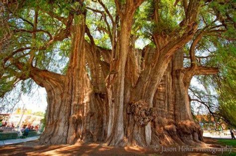 beyaar unique trees