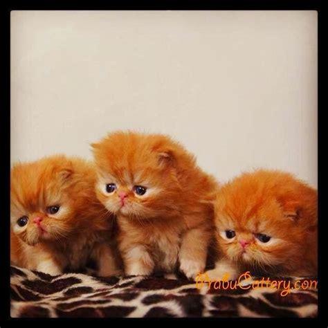 Kandang Kucing 1 Meter prabu cattery kandang kucing